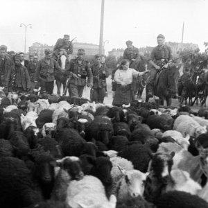 Żołnierze niemieccy wycofujący się z Warszawy. Koniec lipca 1944 r., fot. T. Bukowski/Muzeum Powstania Warszawskiego